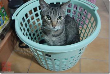 DSC01630_一籃貓