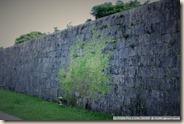 CIMG1952_植物在牆上爬成樹的形狀