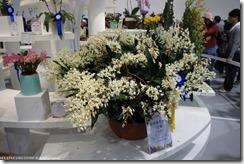 DSC00195_花多到數不清的蘭花