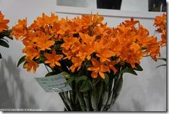 DSC00189_橘色的蘭花