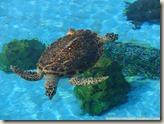 CIMG2585_海龜池