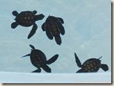CIMG2589_小海龜
