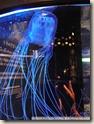 CIMG2420_很像燈泡的水母
