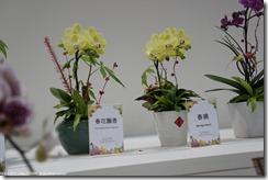 DSC00158_蘭花-春