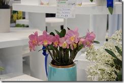 DSC00197_粉紅色的蘭花