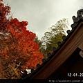 120119西明寺 (09).JPG