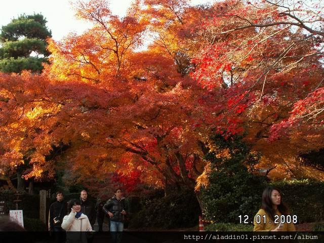 120142嵐山常寂光寺 (22).JPG