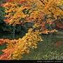 120156嵐山 (02).JPG