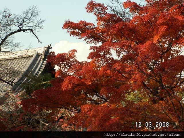 120334永觀堂 (42).JPG