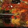 120357高台寺 (23).JPG