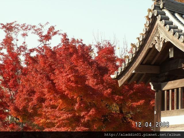 120437東福寺 (12).JPG