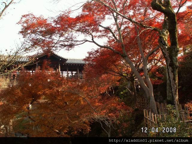 120448東福寺 (38).JPG