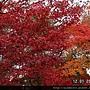 1201嵐山常寂光寺 (36)