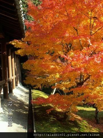 1204東福寺 (44)