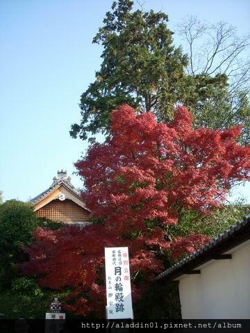 1204東福寺58