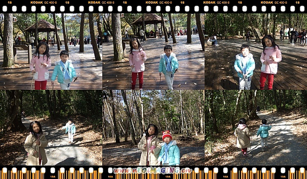 奧萬大國家森林遊樂區[Day 2]34.jpg