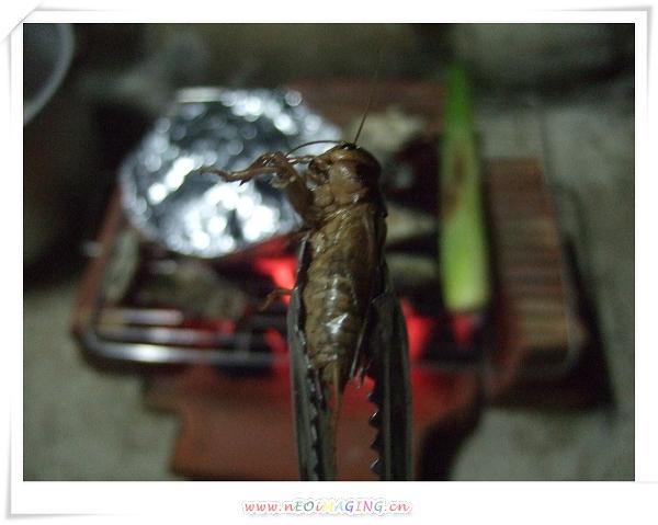 山上烤肉趣22.jpg