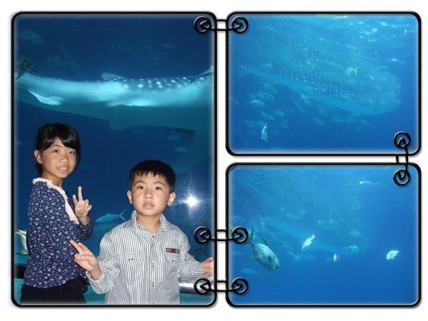 國立海洋生物博物館[屏東海生館]32
