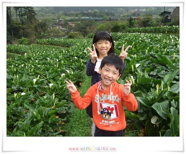 2012竹子湖海芋季7