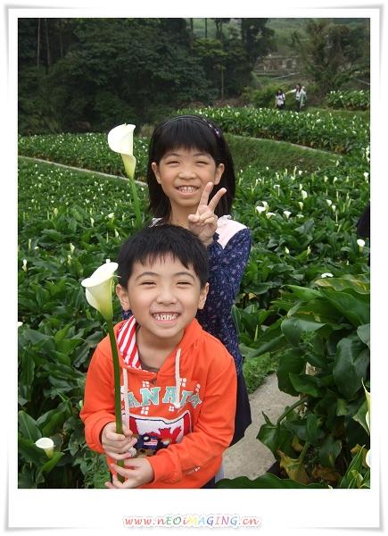 2012竹子湖海芋季10