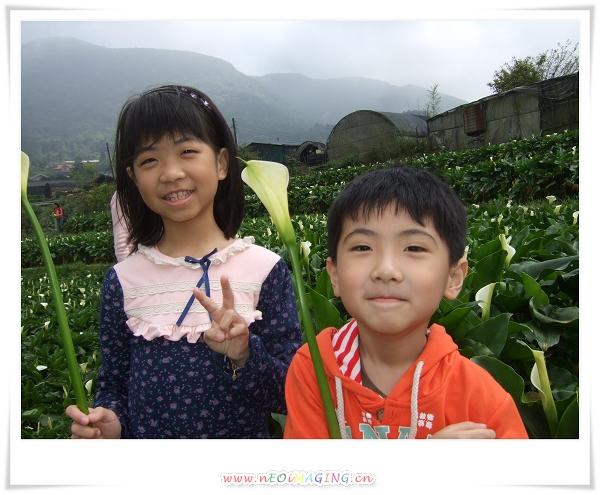 2012竹子湖海芋季11