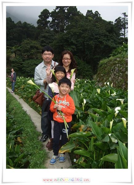 2012竹子湖海芋季12