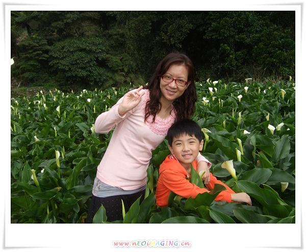 2012竹子湖海芋季13