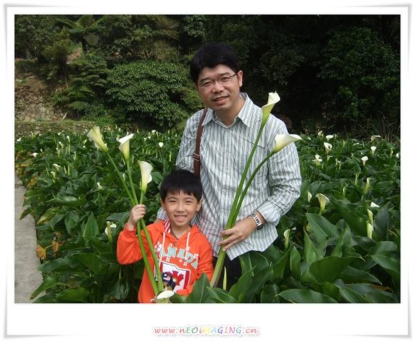 2012竹子湖海芋季14