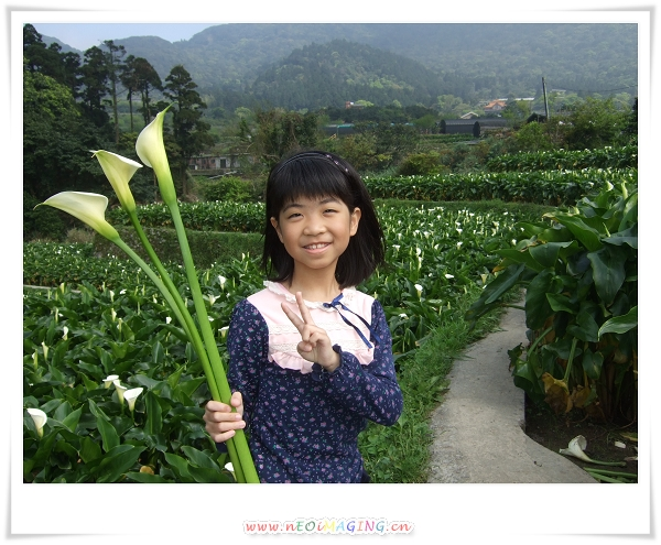 2012竹子湖海芋季15