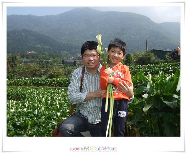 2012竹子湖海芋季17
