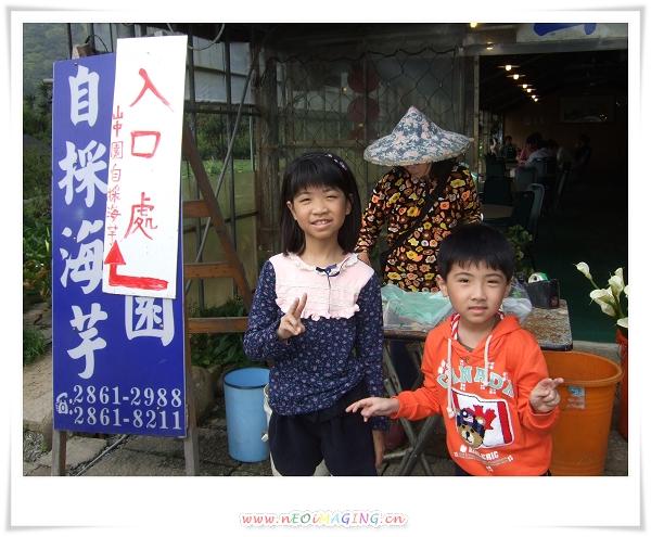 2012竹子湖海芋季20