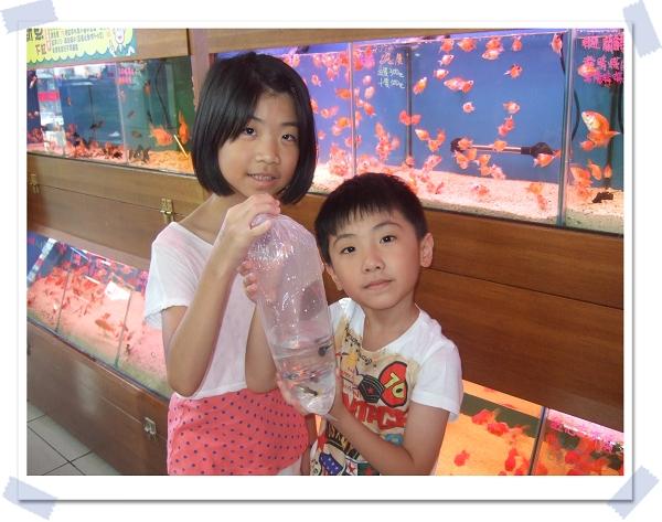 魚中魚寵物水族[新店店]