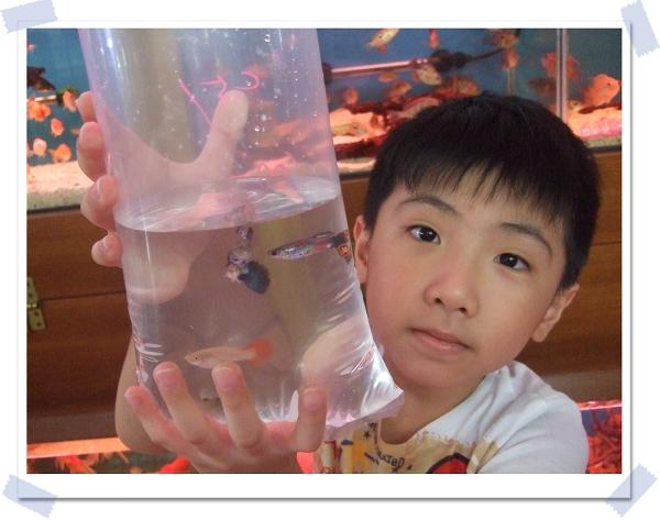 魚中魚寵物水族[新店店]1