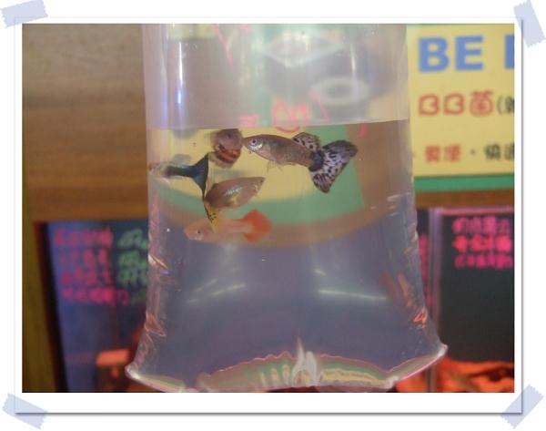 魚中魚寵物水族[新店店]2