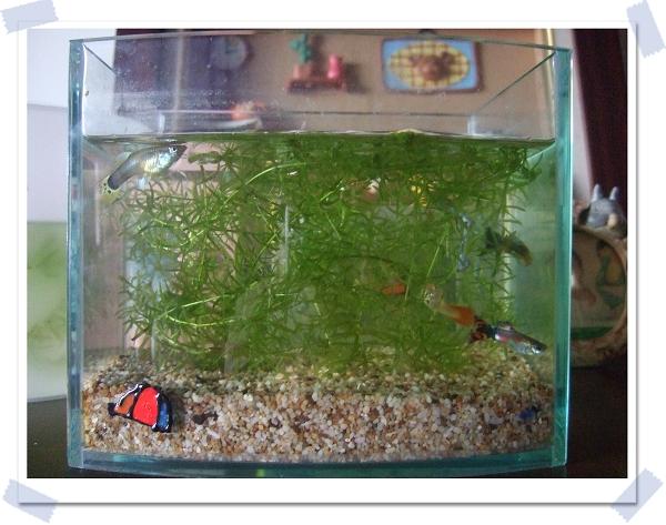 魚中魚寵物水族[新店店]3
