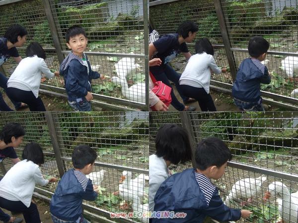 杉木林餐廳[陽明山竹子湖]1
