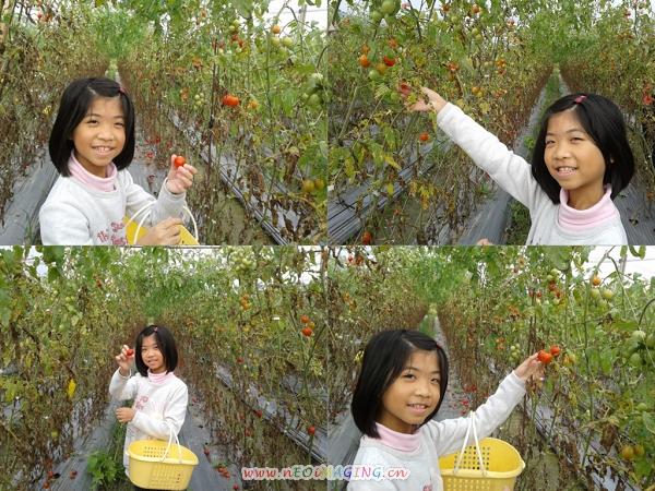 美濃[蕃茄世界觀光果園]2