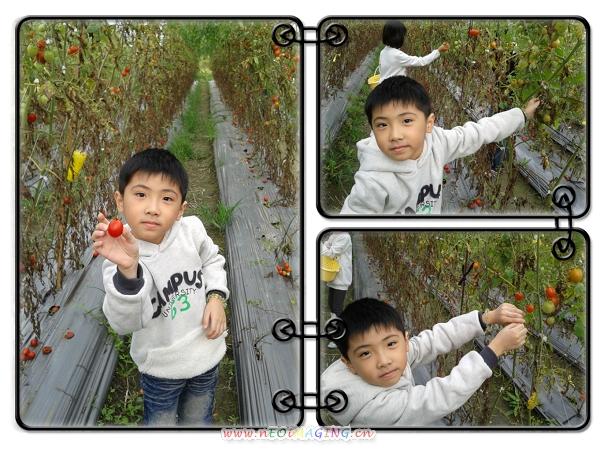 美濃[蕃茄世界觀光果園]3