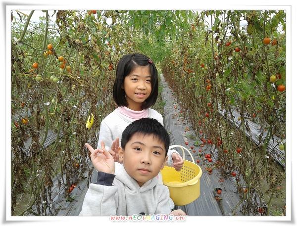 美濃[蕃茄世界觀光果園]4