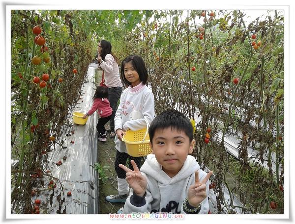 美濃[蕃茄世界觀光果園]5