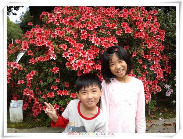 2013臺大杜鵑花節6