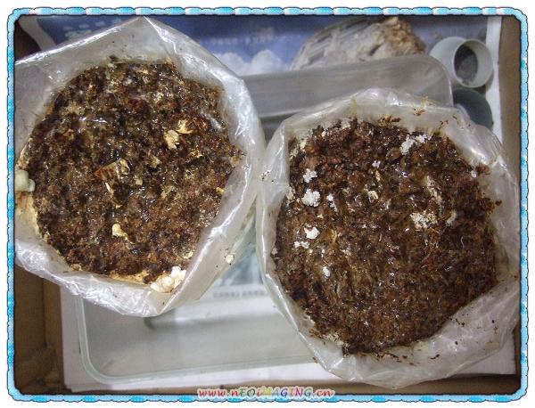 菇菇太空超值包[菇菇世家]7