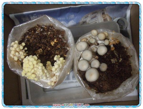 菇菇太空超值包[菇菇世家]11