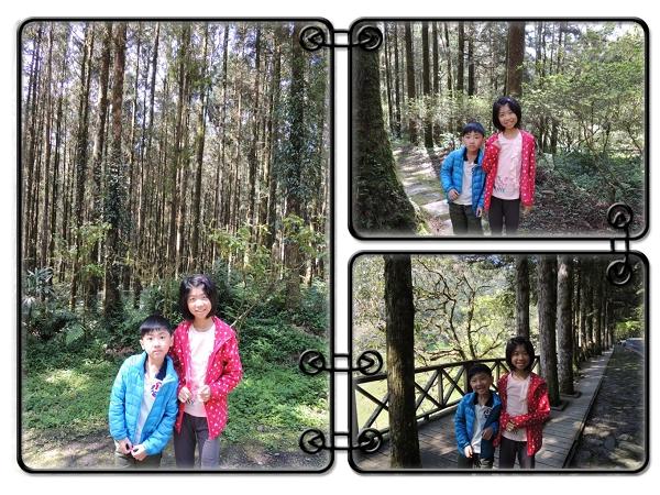 明池森林遊樂區[馬告生態公園]3