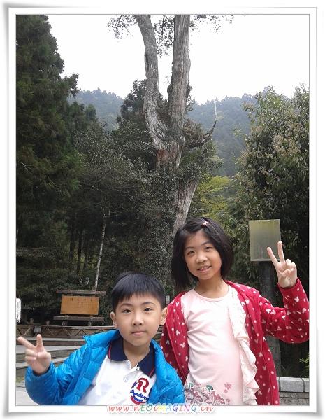 明池森林遊樂區[馬告生態公園]52