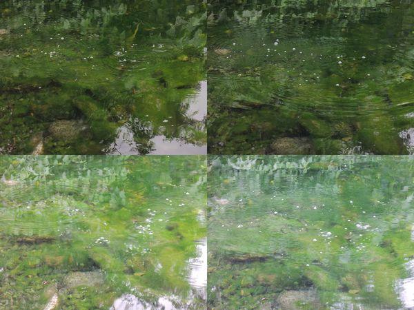 螃蟹冒泡[宜蘭員山]4