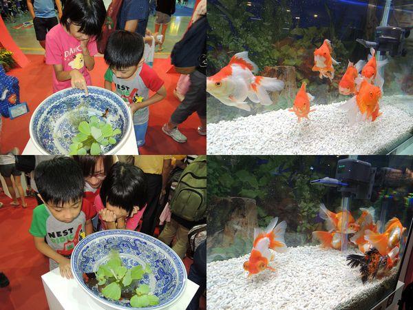 2013台灣觀賞魚博覽會[台北南港展覽館]5