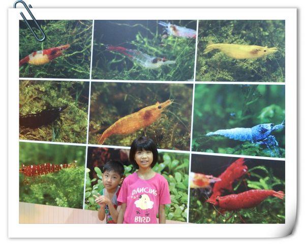 2013台灣觀賞魚博覽會[台北南港展覽館]7