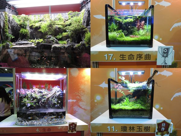 2013台灣觀賞魚博覽會[台北南港展覽館]14