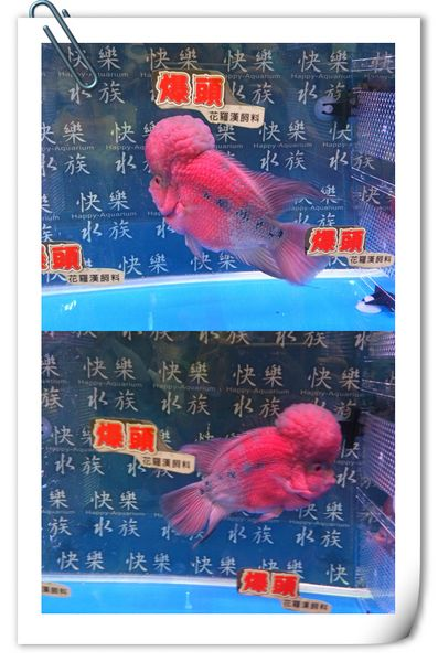 2013台灣觀賞魚博覽會[台北南港展覽館]17